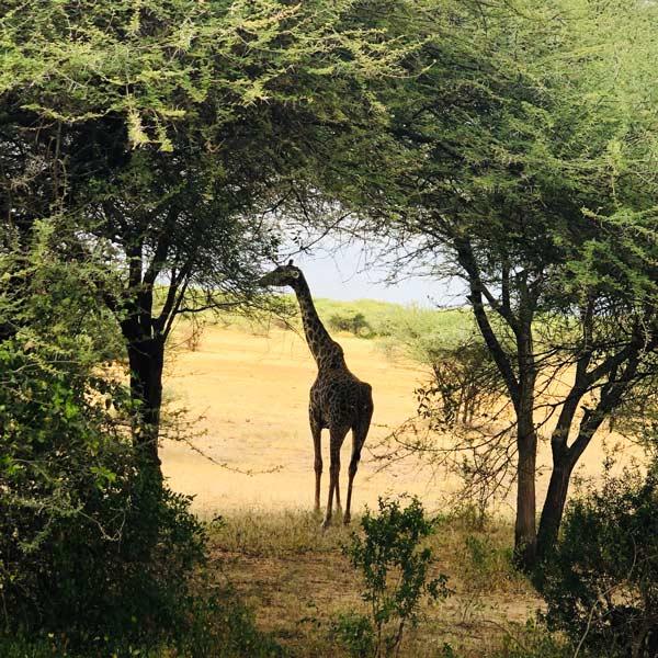 no-veas-que-viajes-solidarios-africa-turismo-responsable-tanzania-voluntariado-safari